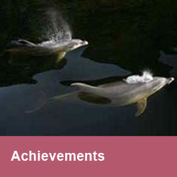 3A.Achievements